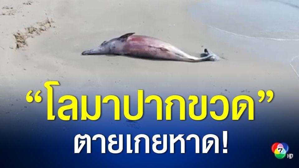 โลมาปากขวดตายเกยหาดหัวไทร เจ้าหน้าที่เร่งเก็บซากไปชันสูตรหาสาเหตุการตาย