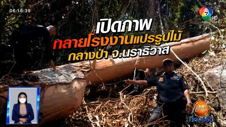 Green Report : เปิดภาพทลายโรงงานแปรรูปไม้กลางป่า จ.นราธิวาส