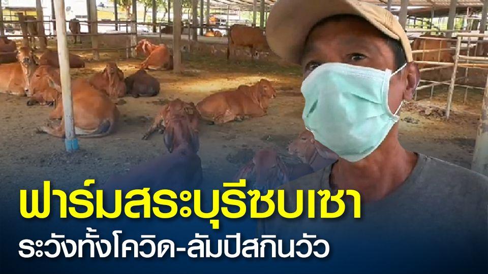 ฟาร์มเลี้ยงวัวสระบุรีซบเซาหนัก ต้องระวังทั้งโควิดระบาดในคน  ยังต้องระวังโรคลัมปีสกินในวัว  ต้องหยุดซื้อ-ขาย และผยุงธุรกิจให้รอด
