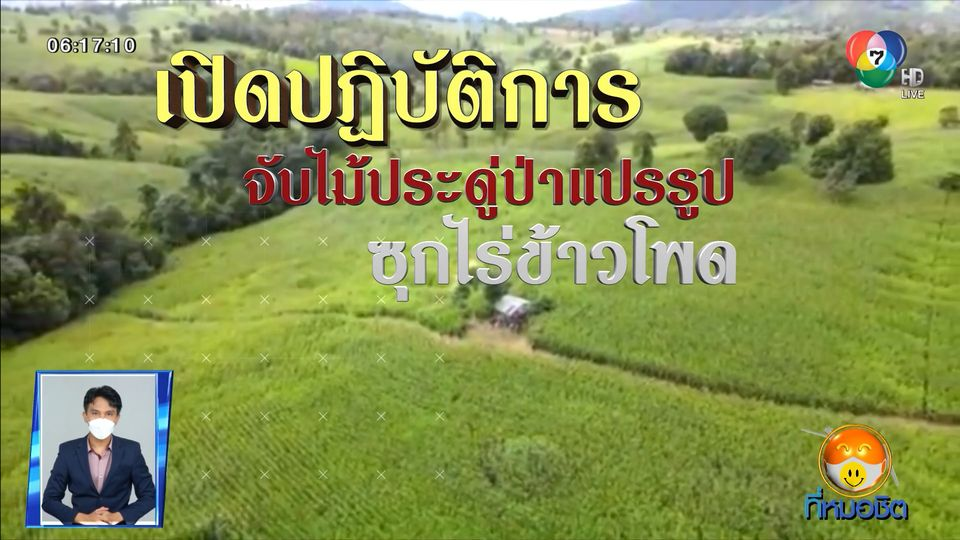 Green Report : เปิดปฏิบัติการจับไม้ประดู่ป่าแปรรูป ซุกไร่ข้าวโพด