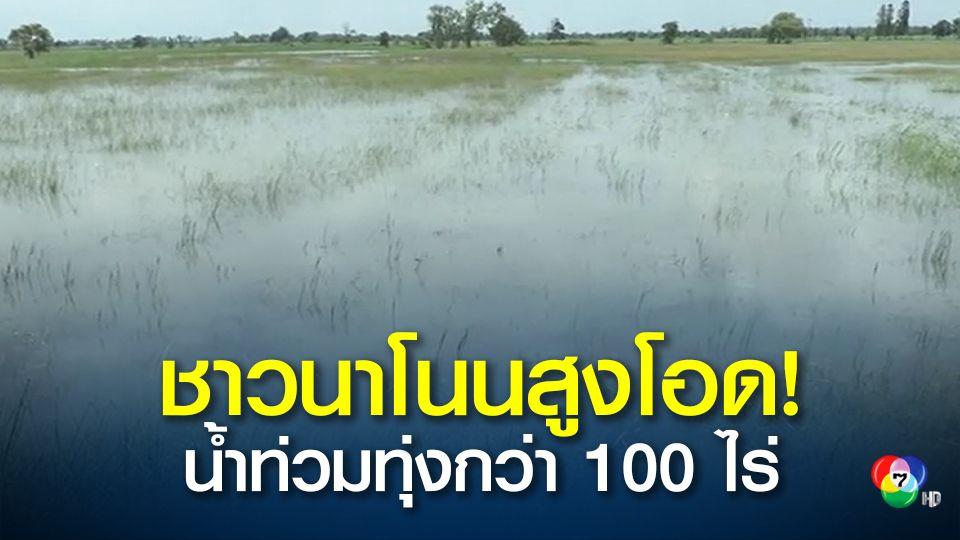 ปริมาณน้ำลำเชียงไกร อ.โนนสูง จ.นครราชสีมา เพิ่มสูงขึ้น ท่วมนาข้าว กว่า 100 ไร่