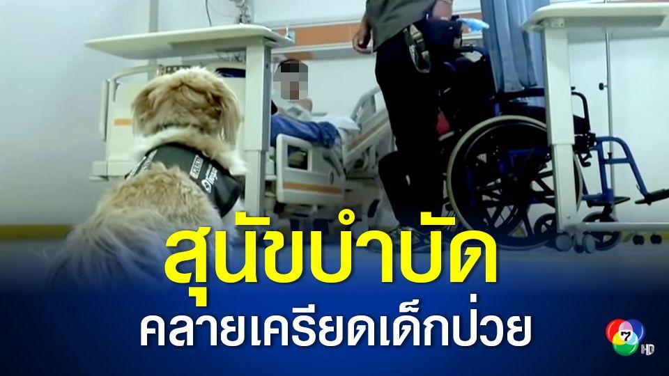 ชิลีใช้น้องหมา ช่วยบำบัด เพื่อคลายความเครียดให้กับผู้ป่วย
