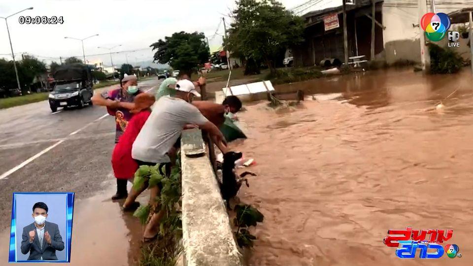 ภาพเป็นข่าว : ทุกชีวิตมีค่า! ชาวบ้านร่วมใจช่วยชีวิตสุนัขถูกน้ำป่าพัด ที่ลพบุรี