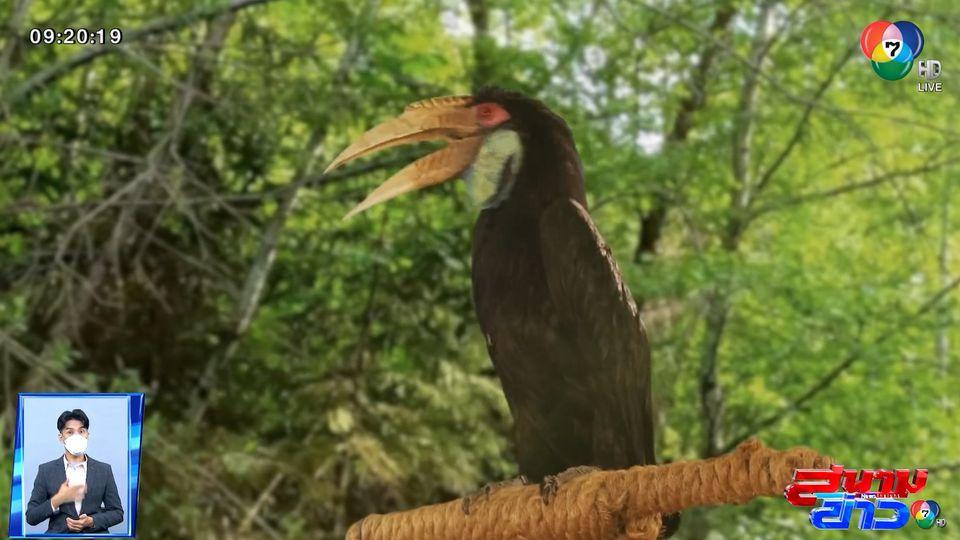 คลายสงสัย ใครคือเจ้าของเสียงพากย์ นกอันโตนีโอ ในละคร ธิดาวานร เริ่มตอนแรก 20 ต.ค.นี้ : สนามข่าวบันเทิง