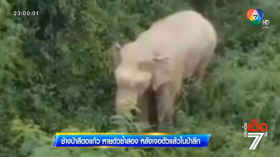 ช้างป่าสีดอแก้ว หายตัวซ้ำสอง หลังเจอตัวแล้วในป่าลึก