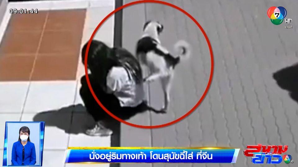 ภาพเป็นข่าว : สาวนั่งเล่นมือถือริมทางเท้า โดนสุนัขฉี่ใส่ไม่รู้ตัว