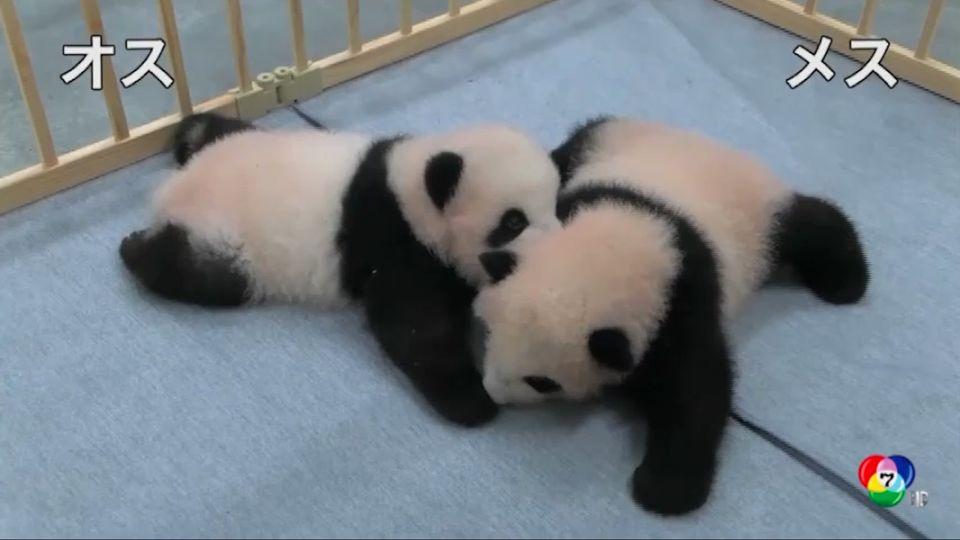สวนสัตว์โตเกียวเปิดตัวแพนด้าฝาแฝด