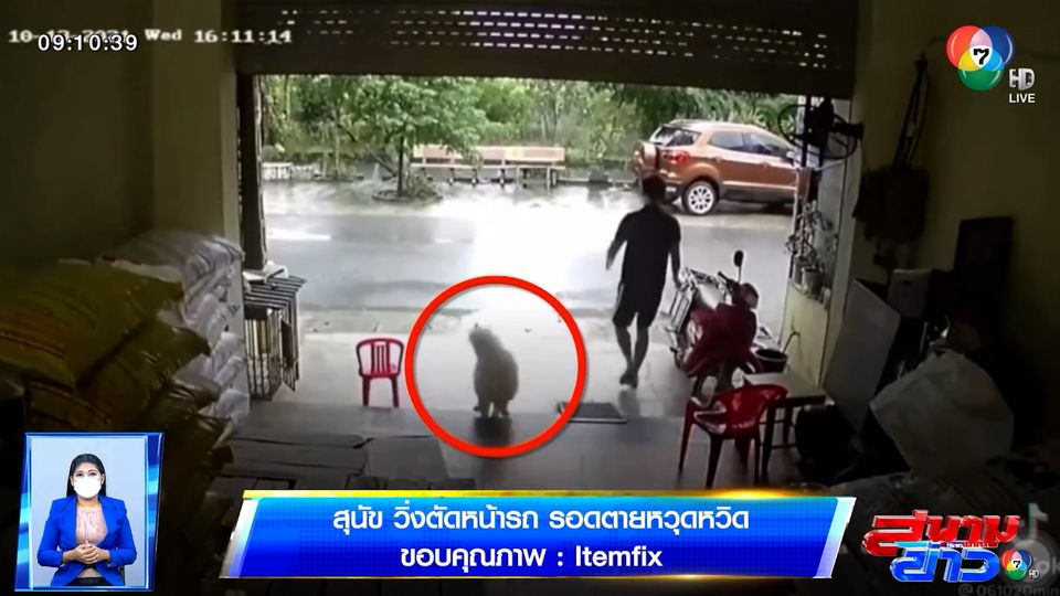 ภาพเป็นข่าว : สุนัขวิ่งตัดหน้ารถบรรทุก รอดตายหวุดหวิด