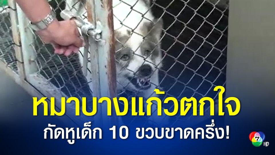 เด็กชายวัย 10 ขวบถูก สุนัขพันธุ์บางแก้ว ที่เลี้ยงไว้กัดจนหูขาด