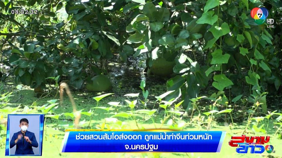 รายงานพิเศษ : ช่วยสวนส้มโอส่งออก ถูกแม่น้ำท่าจีนท่วมหนัก จ.นครปฐม