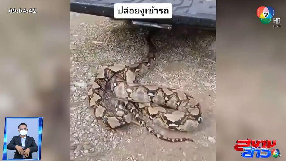ภาพเป็นข่าว : ปล่อยงูเข้ารถ แบบนี้ก็ได้หรือ