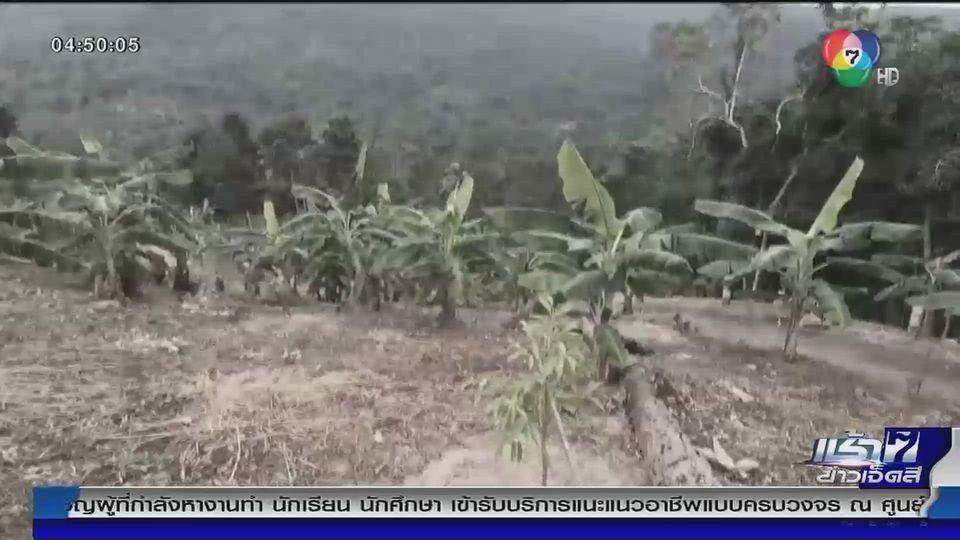 Green Report : แผ้วถางป่าเขาร่อน เกาะสมุย