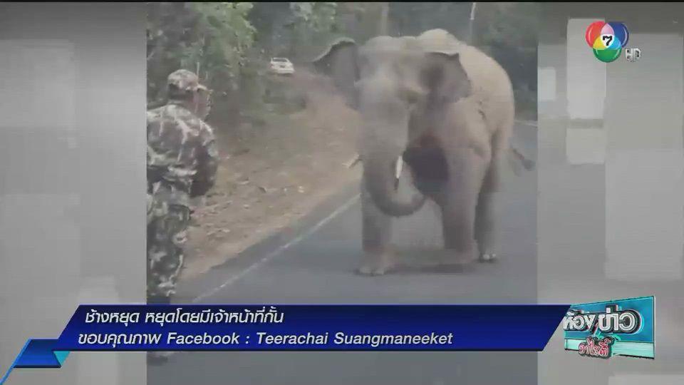 เรื่อง Hot Social Hit : ช้างหยุด หยุดโดยมีเจ้าหน้าที่กั้น