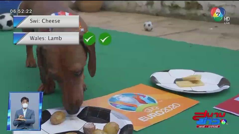 สุนัขทำนายผลฟุตบอลยูโร 2020 เวลส์ จะชนะ สวิตเซอร์แลนด์