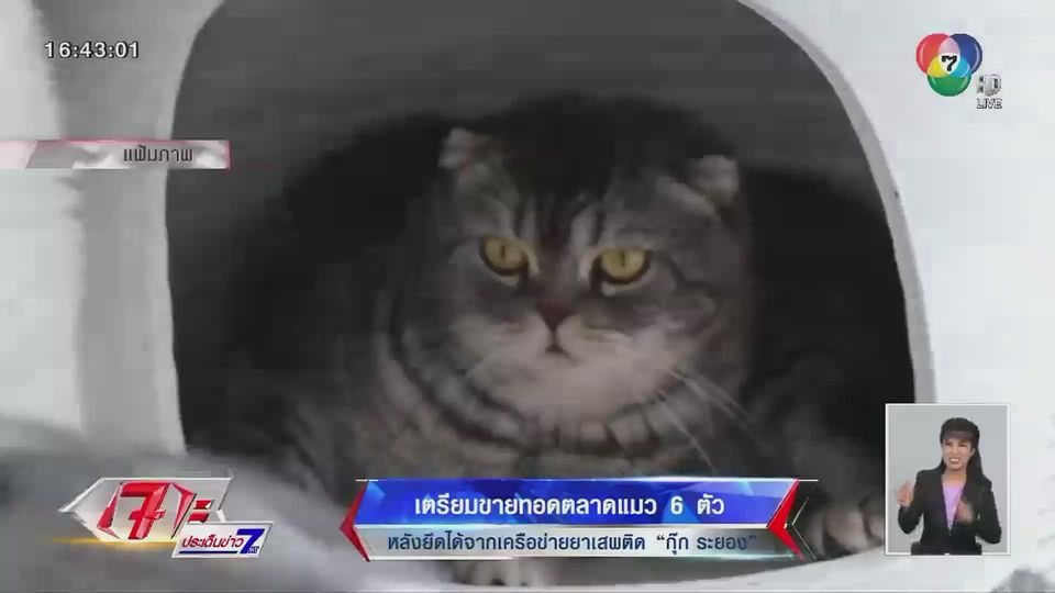 เตรียมขายทอดตลาดแมว 6 ตัว หลังยึดได้จากเครือข่ายยาเสพติด กุ๊ก ระยอง
