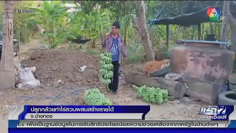 เกษตรกร จ.อ่างทอง ปลูกกล้วย-ทำไร่สวนผสมสร้างรายได้