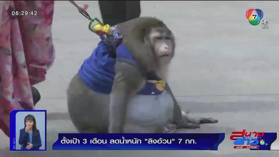 ภาพเป็นข่าว : ตั้งเป้า 3 เดือน ลดน้ำหนักลิงอ้วน 7 กก.