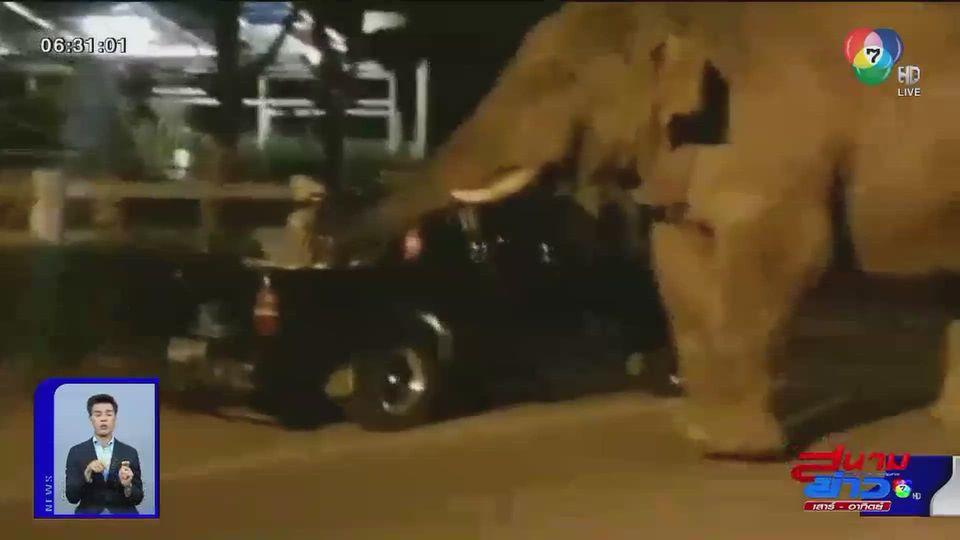 ภาพเป็นข่าว : นาทีชีวิต ช้างป่าขาใหญ่วิ่งไล่แตกกระเจิง