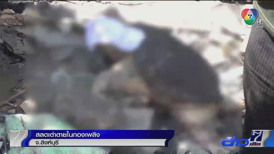 สลด เต่าตายในกองเพลิงที่ลุกไหม้โกดังที่ จ.สิงห์บุรี