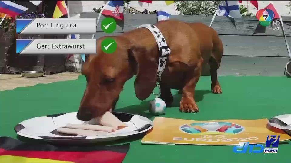 สุนัขพันธุ์ดัชชุน ทำนายผลฟุตบอลยูโร 2020 โปรตุเกส เสมอ เยอรมนี