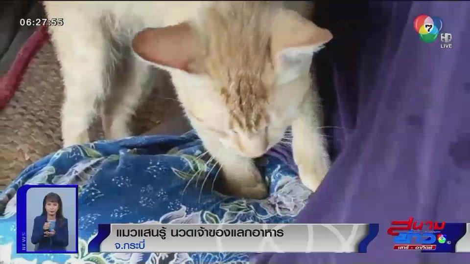ภาพเป็นข่าว : แมวแสนรู้ นวดเจ้าของแลกอาหาร