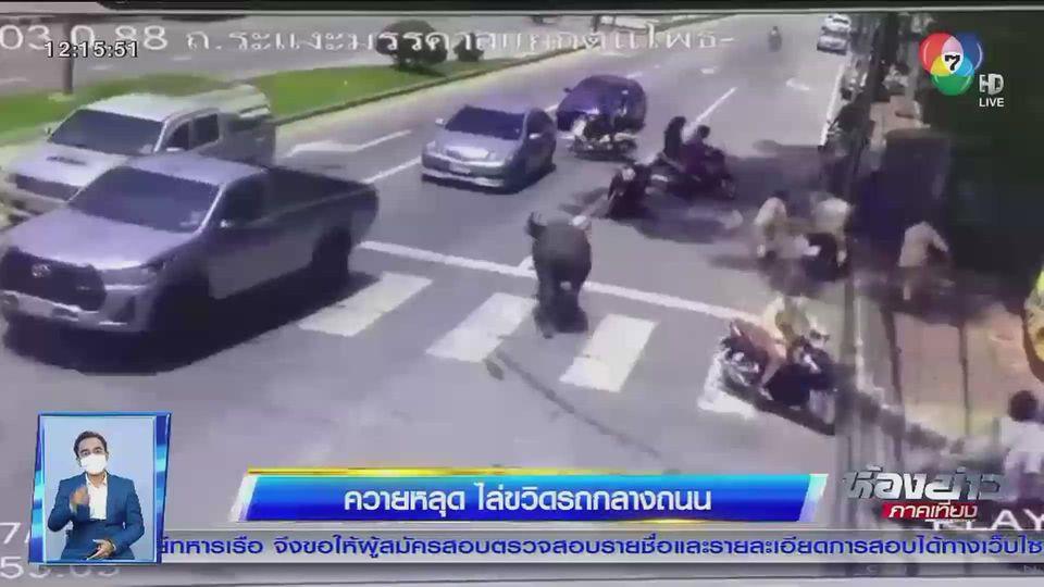 แชร์สนั่นโซเชียล : ควายหลุด ไล่ขวิดรถกลางถนนกระเจิง