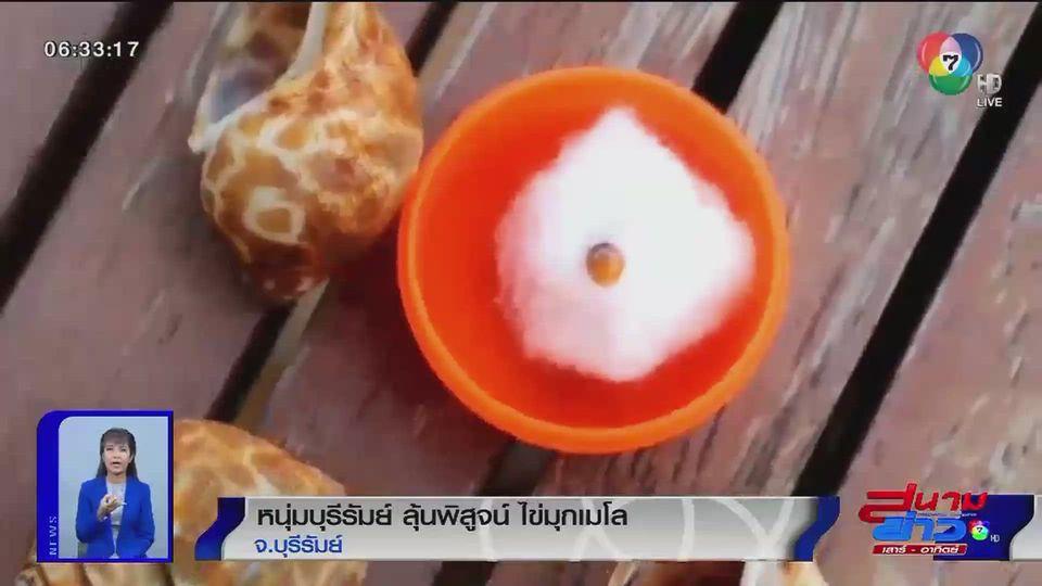 ภาพเป็นข่าว : หนุ่มบุรีรัมย์ ลุ้นพิสูจน์ไข่มุกเมโล