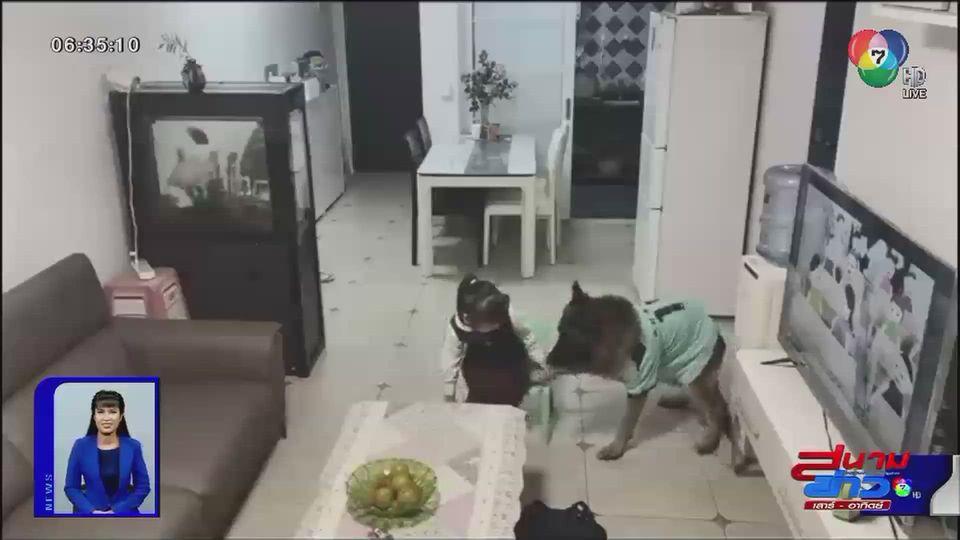 ภาพเป็นข่าว : ฝึกสุนัขให้คุมลูกทำการบ้าน