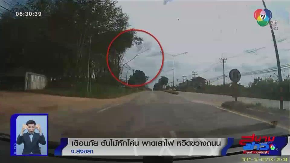 ภาพเป็นข่าว : เตือนภัย ต้นไม้หักโค่น พาดเสาไฟฟ้า หวิดขวางถนน