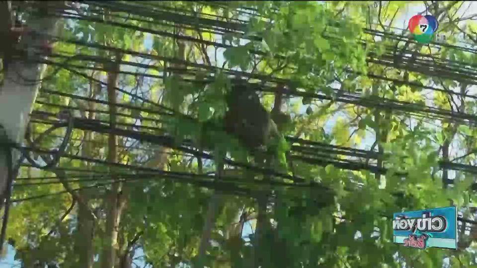 รายงานพิเศษ : ช่วยเหลือลิงแสมถูกไฟช็อต อาการสาหัส