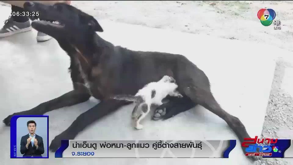 ภาพเป็นข่าว : น่าเอ็นดู พ่อหมา ลูกแมว คู่ซี้ต่างสายพันธุ์