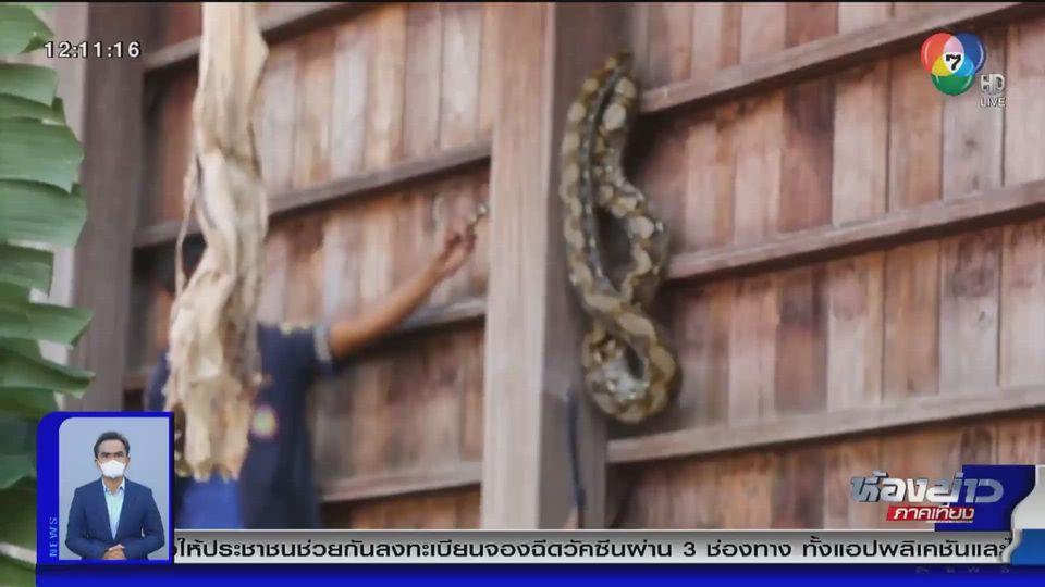 แชร์สนั่นโซเชียล : ระทึก กู้ภัยสาวจับงูยักษ์มือเปล่า