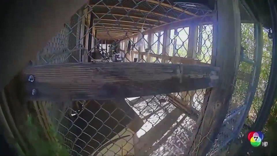 เจ้าหน้าที่สหรัฐฯ ยิงชิมแปนซี เหตุทำร้ายมนุษย์