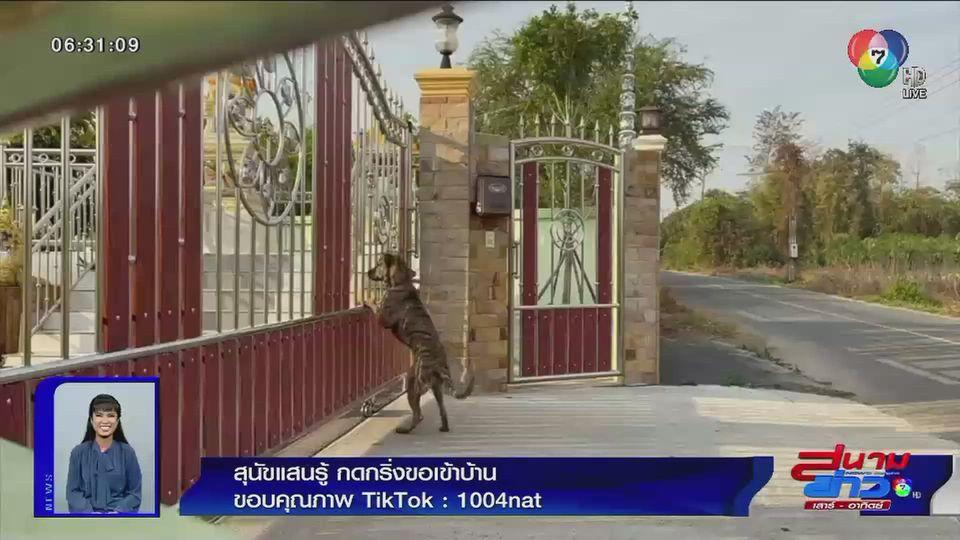 ภาพเป็นข่าว : สุนัขแสนรู้ กดกริ่งขอเข้าบ้าน