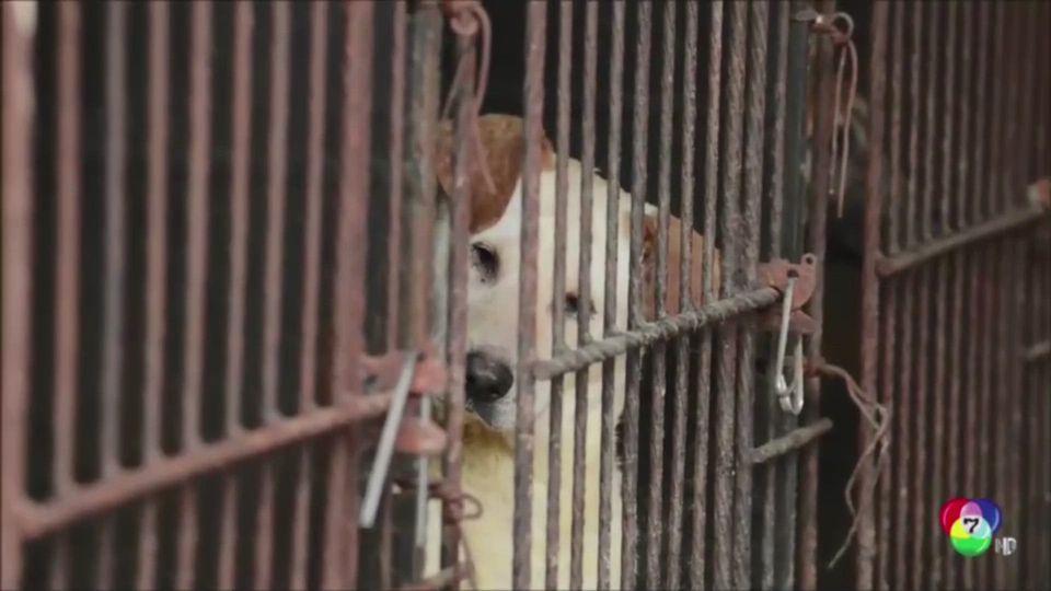 ผู้นำเกาหลีใต้พิจารณาออกกฏหมายห้ามบริโภคเนื้อสุนัข