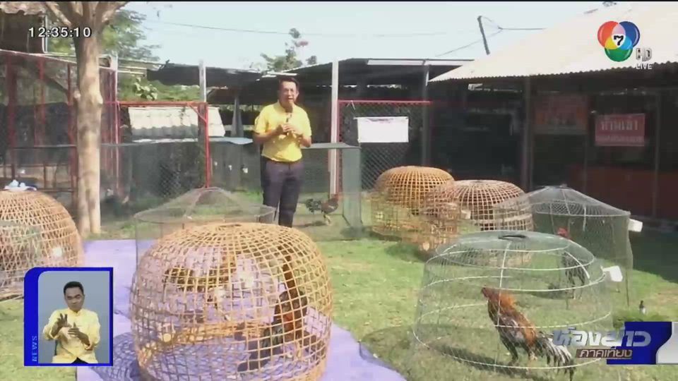 ตีตรงจุด : กีฬาชนไก่ ปิดรอเปิดที่อาจต้องรอนาน (มาก)