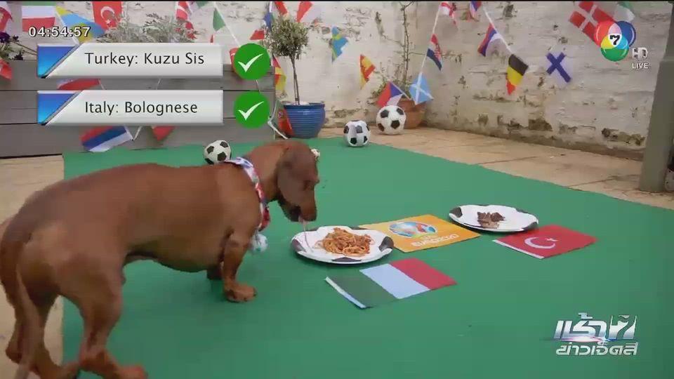 สุนัขทำนายผลฟุตบอลยูโร คู่เปิดสนาม อิตาลี จะเสมอ ตุรกี