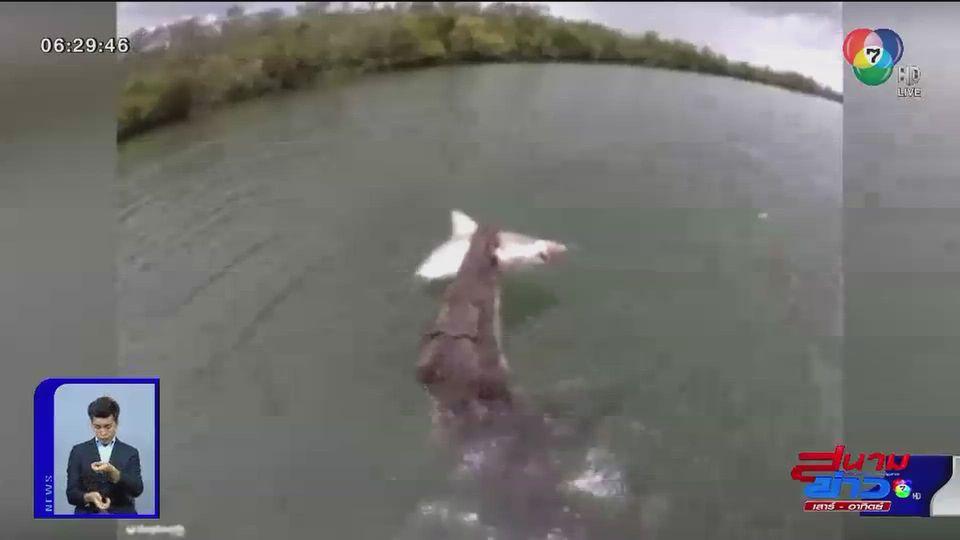 ภาพเป็นข่าว : ระทึก จระเข้พุ่งงับฉลามจากชาวประมง
