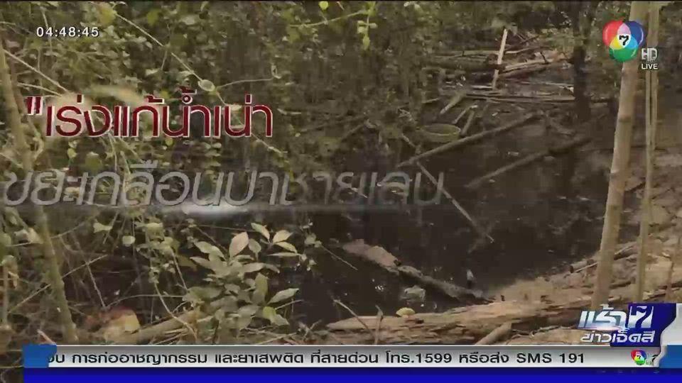 Green Report : ป่าชายเลนด่านสุดท้ายดักขยะจากน้ำท่วม