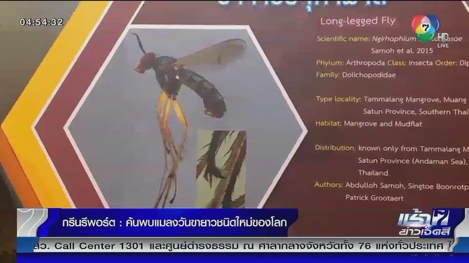 Green Report : ค้นพบแมลงวันขายาวชนิดใหม่ของโลก