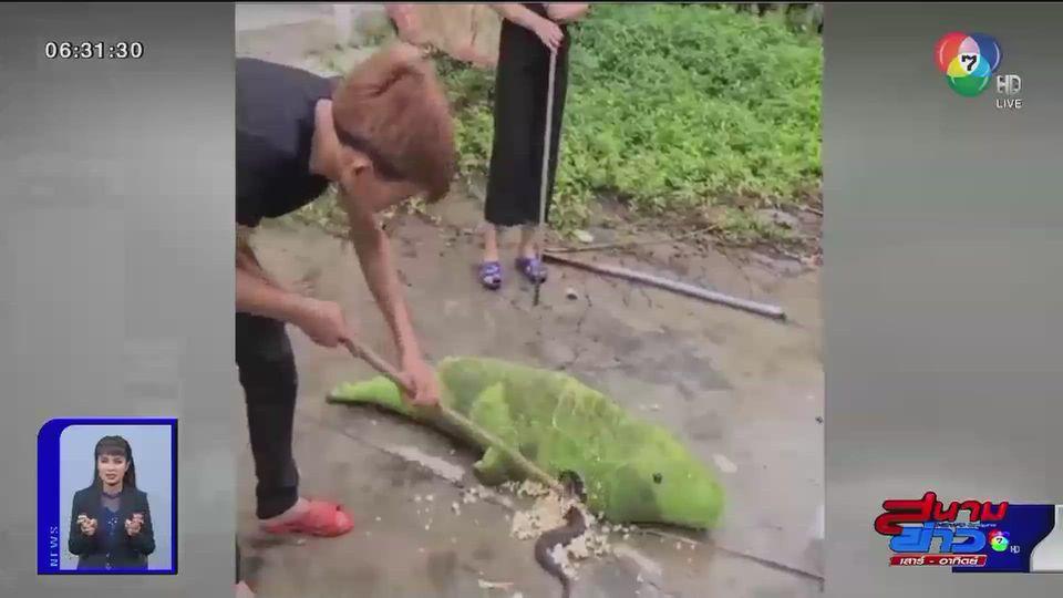 ภาพเป็นข่าว : ตุ๊กตาจระเข้ซ่อนงู