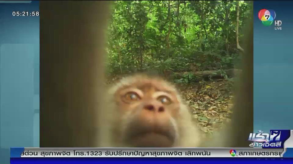 เปิดภาพจากกล้องดักถ่าย พบเจ้าจ๋อเซลฟี่
