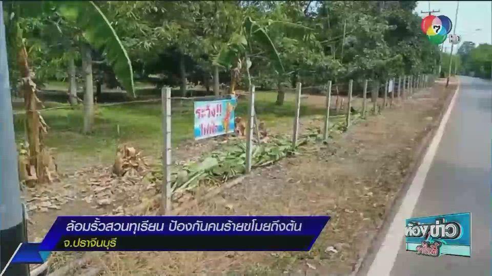 รายงานพิเศษ : ล้อมรั้วสวนทุเรียนที่ จ.ปราจีนบุรี ป้องกันโจรขโมยถึงต้น