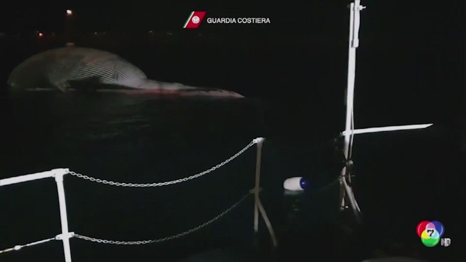 อิตาลีกู้ซากวาฬหนัก 70 ตัน ใหญ่ที่สุดเท่าที่เคยพบมา