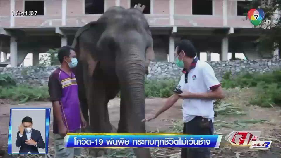 รายงานพิเศษ : โควิด-19 พ่นพิษ กระทบทุกชีวิตไม่เว้นช้าง