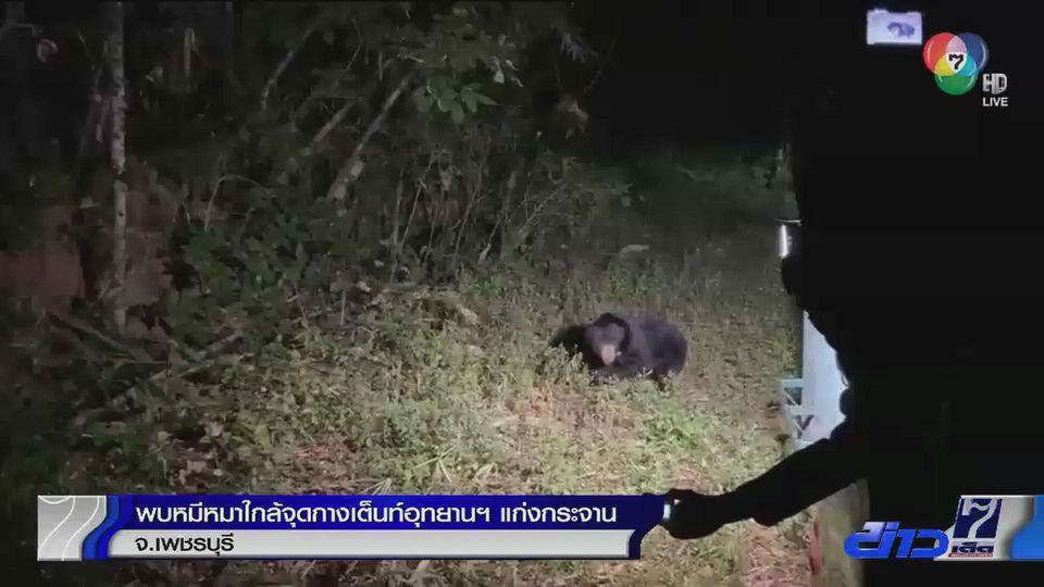 พบหมีหมาใกล้จุดกางเต็นท์นักท่องเที่ยวอุทยานฯ แก่งกระจาน จ.เพชรบุรี