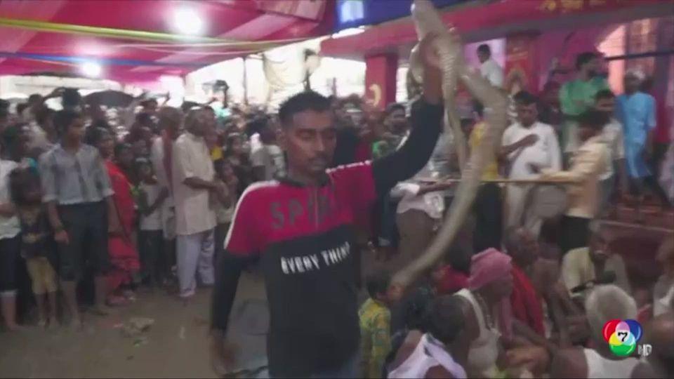 อินเดีย จัดงานเทศกาลบูชางูของชาวฮินดู