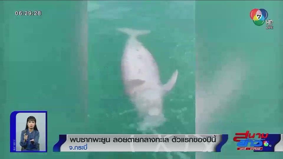 ภาพเป็นข่าว : พบซากพะยูน ลอยตายกลางทะเลกระบี่ ตัวแรกของปีนี้