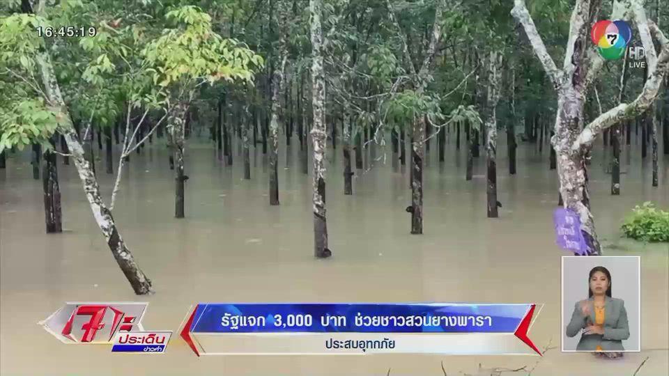 รัฐแจก 3,000 บาท ช่วยชาวสวนยางพาราทางภาคใต้ ถูกน้ำท่วมจนเสียหาย