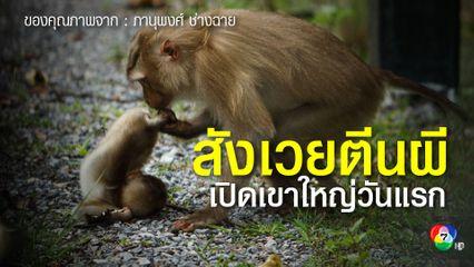 สุดสลด! เปิดเที่ยวเขาใหญ่วันแรก ลูกลิงกังสังเวยตีนผีศพแรก